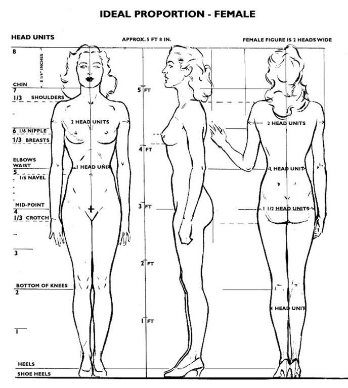disegni del corpo umano di andrew loomis
