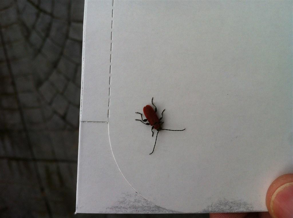 Insetti volanti in casa 28 images insetti in casa neri 28 images invasione insetti neri - Insetti neri in casa ...