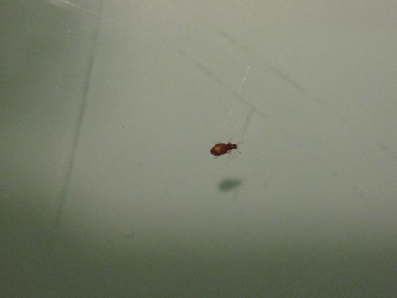 Piccoli insetti sul muro foto pestforum for Piccoli disegni di casa