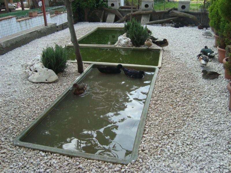 Vasche in vetroresina da giardino cocincina poultry for Vasca x pesci rossi