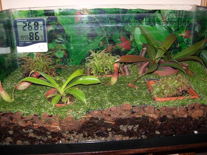 Progetto terrario lowland rexplants piante carnivore